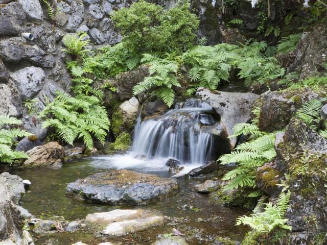 泉神社湧水