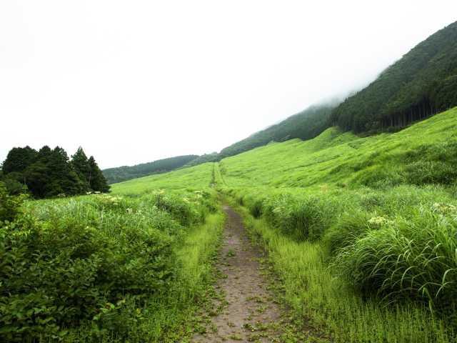 仙石原高原のススキ