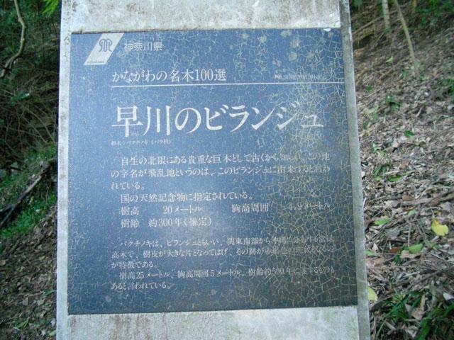 早川のビランジュ