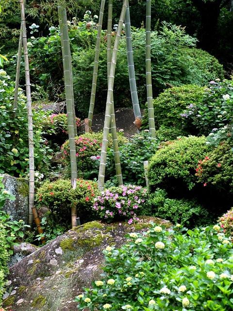 定林寺のアジサイ