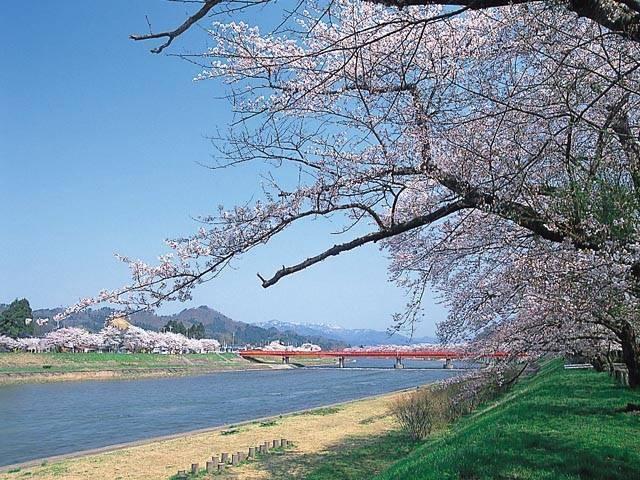 桧木内川堤のソメイヨシノ