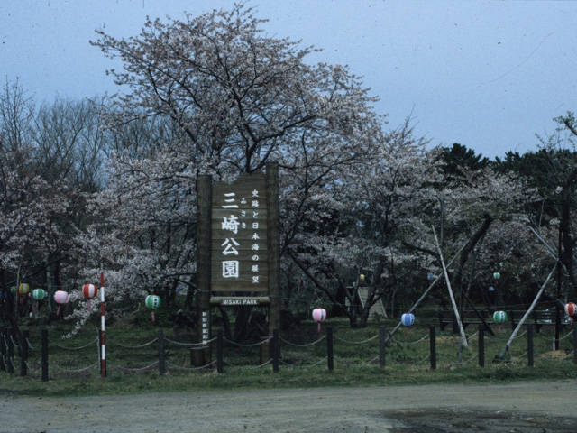 三崎公園キャンプ場