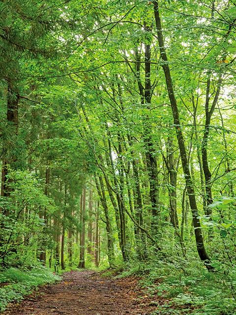 ツアールの森