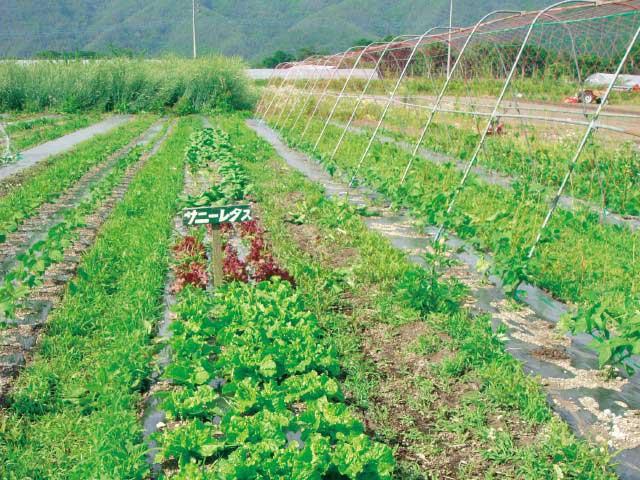体験農園みのり農場