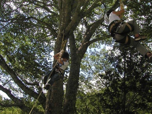 茶臼山高原木のぼりキャンプ村