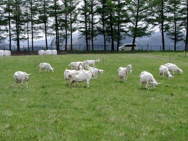家畜改良センター茨城牧場長野支場