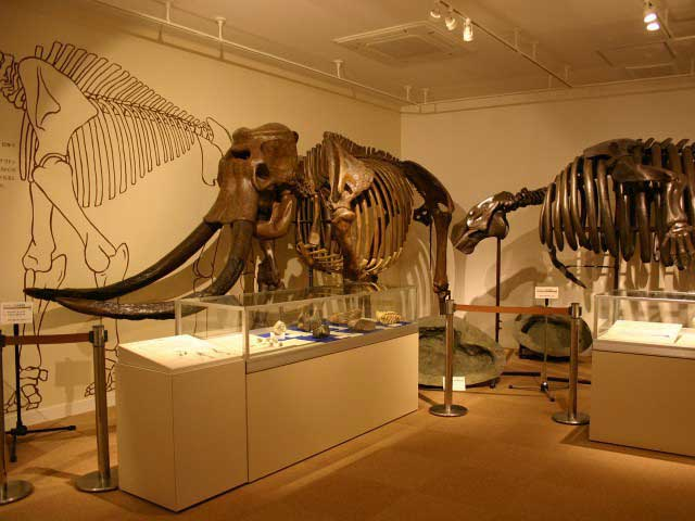 戸隠地質化石博物館
