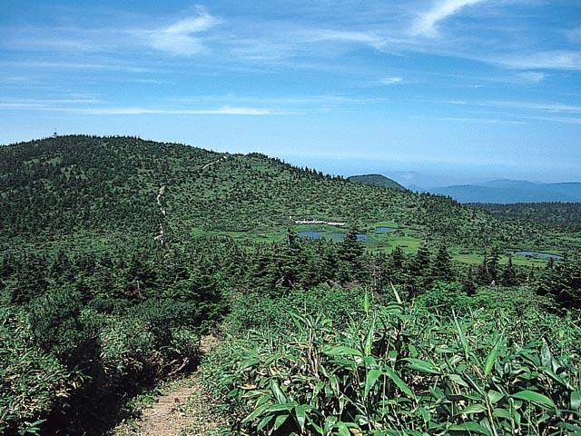 田代平湿原