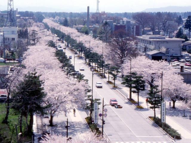 「官庁街通り」(駒街道)