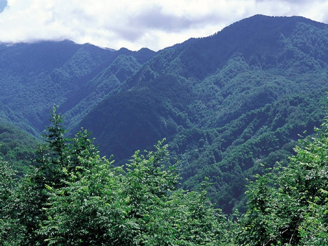 白神山地(青森県)