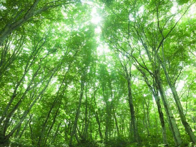 世界遺産の径 ブナ林散策道コース