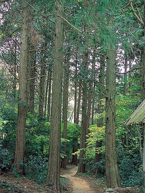 宗太郎杉並木