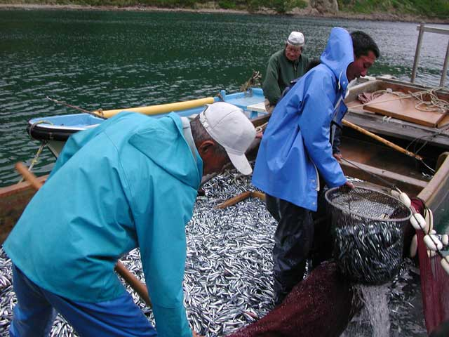 キビナゴ漁