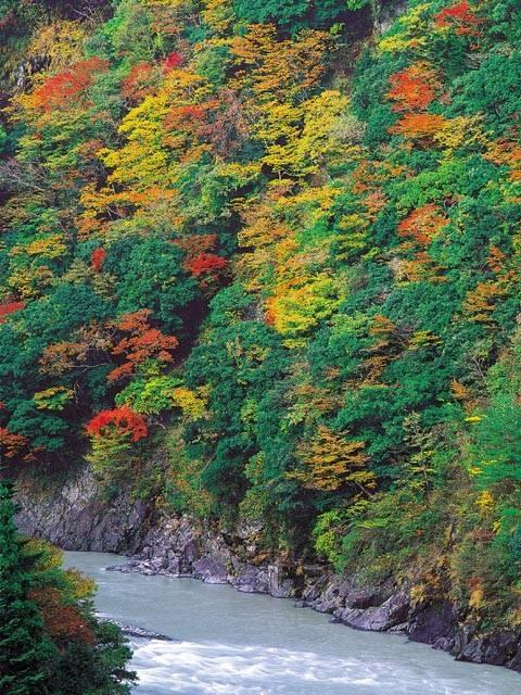 接阻峡の紅葉