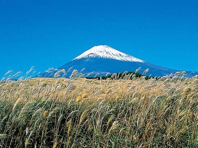 ススキと富士山
