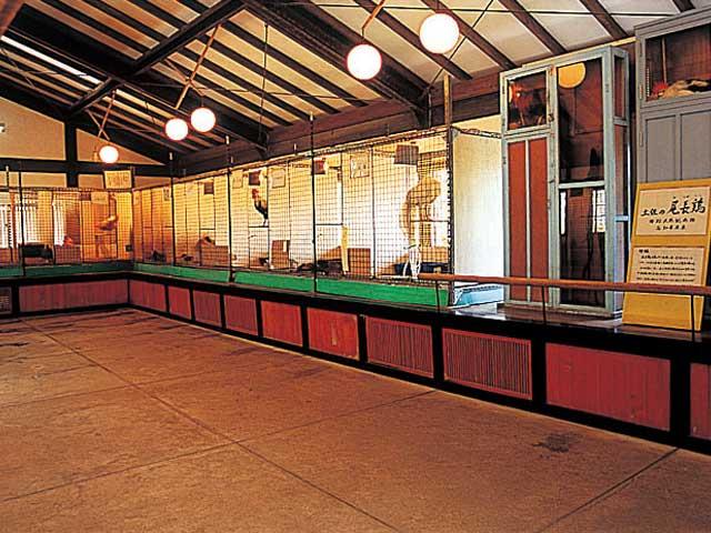 龍河洞珍鳥センター