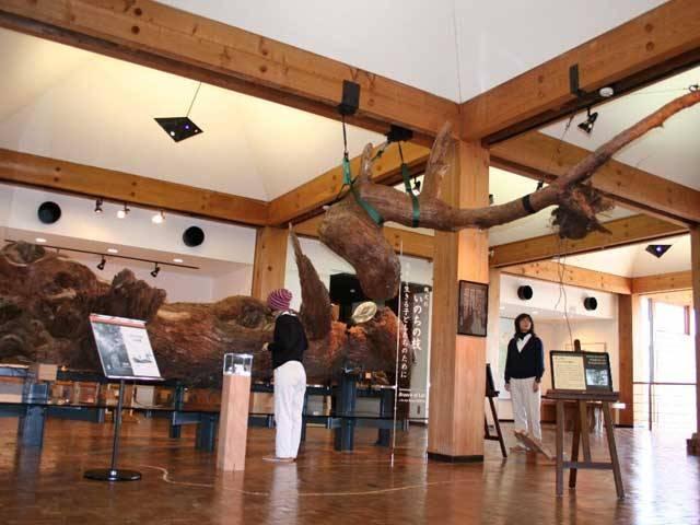 屋久島町屋久杉自然館