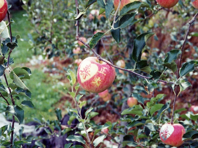 南アルプスのリンゴ