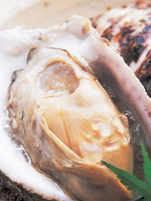 鳥取の岩牡蠣