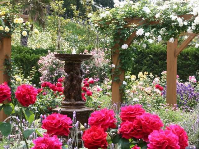 岡山のバラ