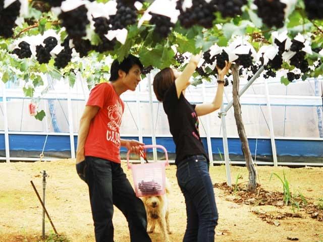 岡山のブドウ