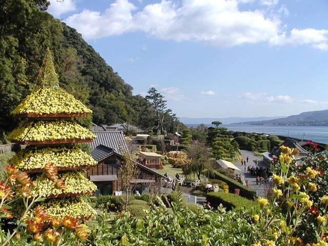 鹿児島の菊