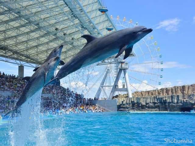 【名古屋港水族館】キュートな海の生き物にトキメキ♪
