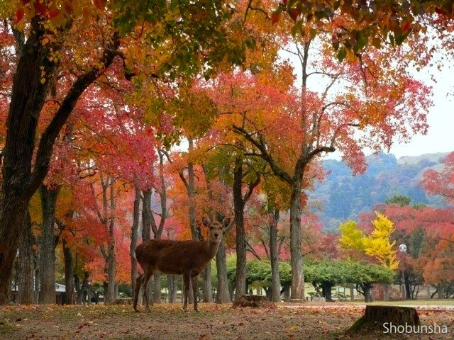 奈良公園【奈良県】