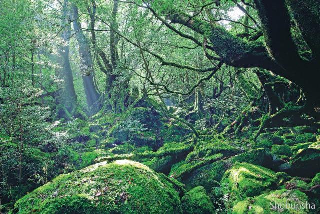 白谷雲水峡】屋久島の神秘の森で...
