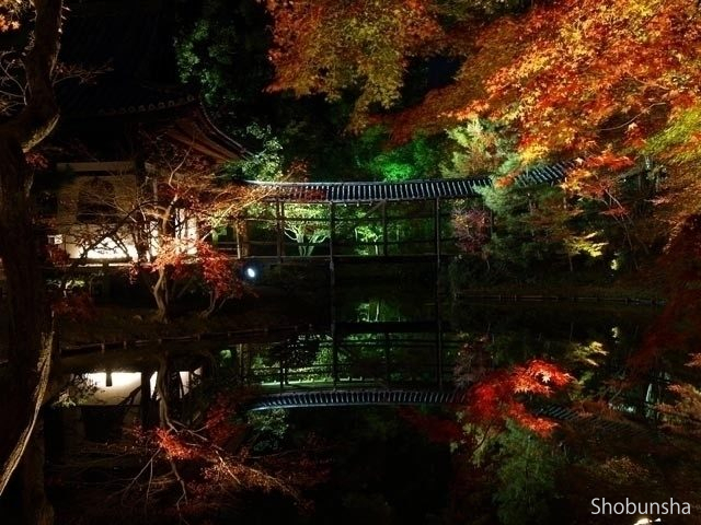 高台寺(ライトアップ)【京都府】