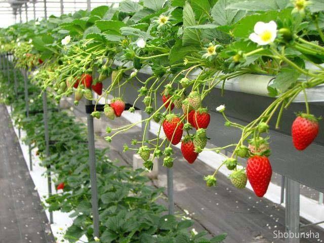 ハッピー農園【三重県】
