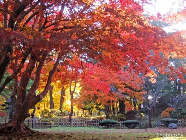 見晴公園(ライトアップ)【北海道】
